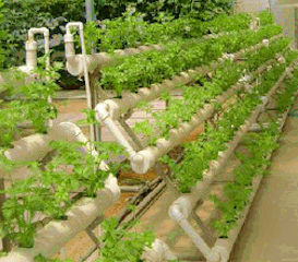 soil-free systems