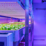 vertical farming 3